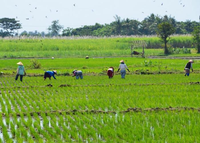 crop hunting