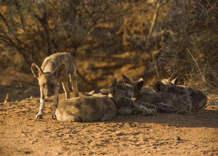 South Africa - Cape to Kalahari