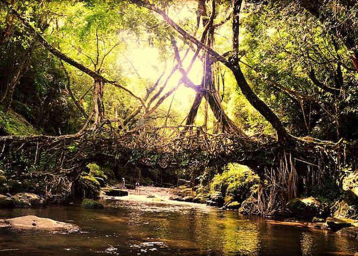 The Living Root Bridges Of Cherrapunji In Megahalya India