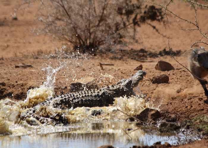 wild animals in african forest