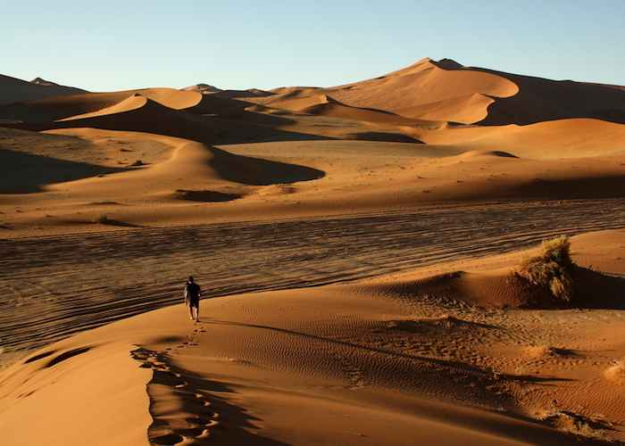 sand desert in african forest
