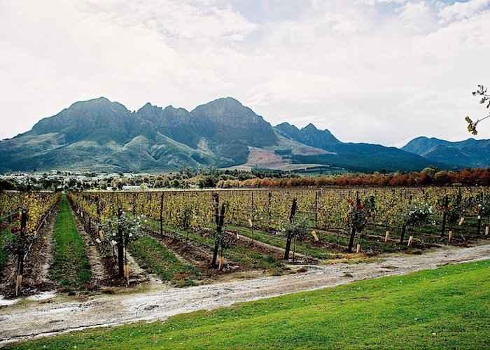 Cape winelands Amanda Gillespie